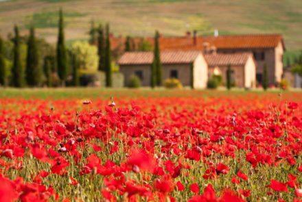 18169784 - tuscany